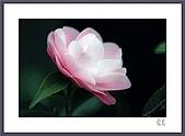 花花樹界:少了質感