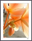 花花樹界:忽略的美