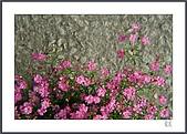 花花樹界:花邊事