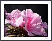 花花樹界:春意