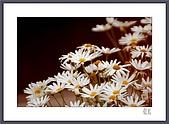 花花樹界:寒冷的角落