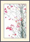 花花樹界:嫣紅點點
