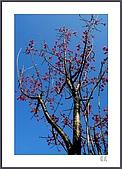 花花樹界:也是櫻紅