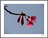 花花樹界:雙雙對對
