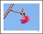 花花樹界:依偎