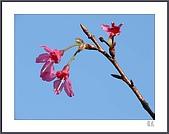 花花樹界:電燈泡
