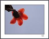 春之木棉:R3-03