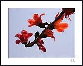春之木棉:R3-04