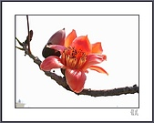 春之木棉:R3-06