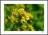 花花樹界:蜂覓.蜂蜜