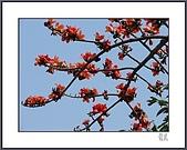 春之木棉:H1-01