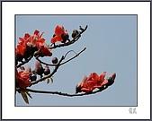春之木棉:H1-02
