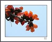春之木棉:H1-03