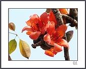春之木棉:H1-08