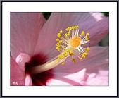 花花樹界(II):迎春花