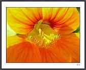 花花樹界(II):DSCN0068