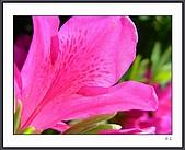 花花樹界(II):DSCN0151