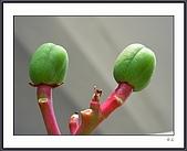 花花樹界(II):DSCN0192