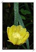 雨中的仙人掌花:10