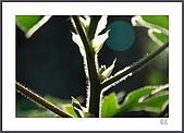 花花樹界:不起眼下的框取