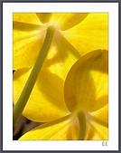 花花樹界:背面