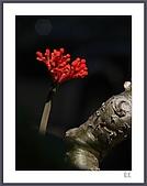 花花樹界:或許