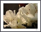 花花樹界:暖色溫下的白