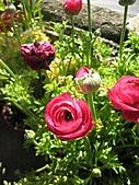2009.Feb Valentine:陽明山吃野菜的小餐廳種的可愛小花