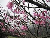 2009.Feb Valentine:櫻花開的季節