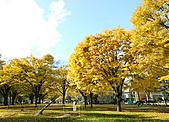 20101113-Hokkaido (6):20101113-12.jpg