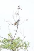 2018年第8本鳥相簿:DSC07275-2.JPG