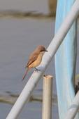 2018年第8本鳥相簿:U14A7435-2.JPG