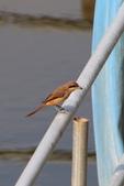 2018年第8本鳥相簿:U14A7432-2.JPG