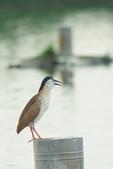 2018年第8本鳥相簿:DSC06833-2.JPG