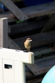2018年第8本鳥相簿:U14A7409-2.JPG
