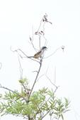 2018年第8本鳥相簿:DSC07276-2.JPG