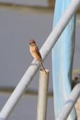 2018年第8本鳥相簿:U14A7420-2.JPG