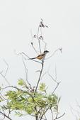 2018年第8本鳥相簿:DSC07277-2.JPG