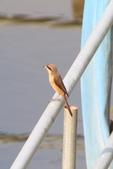 2018年第8本鳥相簿:U14A7414-2.JPG