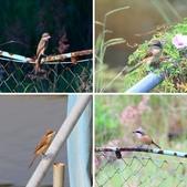 2018年第8本鳥相簿:相簿封面
