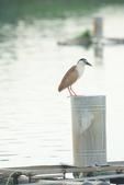 2018年第8本鳥相簿:DSC06803-2.JPG