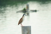 2018年第8本鳥相簿:DSC06831-2.JPG