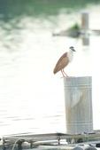 2018年第8本鳥相簿:DSC06811-2.JPG
