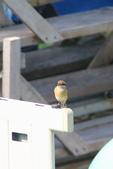 2018年第8本鳥相簿:U14A7407-2.JPG