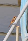 2018年第8本鳥相簿:U14A7436-2.JPG