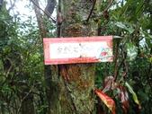 平湖環峰:P3240018.JPG