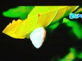 風景:01272010445.jpg