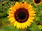 風景:照片20121030 APPLE 280