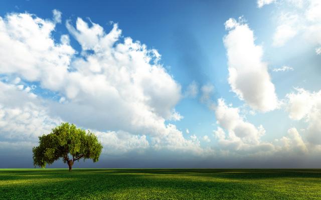 世界最美的風景:草原上的一棵樹