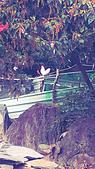 遊記照片:C360_2014-11-03-12-50-16-091.jpg